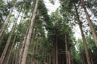 自然の写真・画像素材[65427]