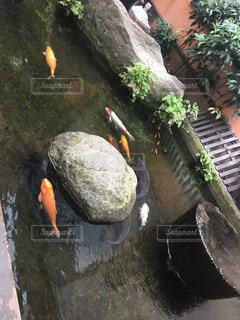 鯉の泳ぐ町での写真・画像素材[1454254]