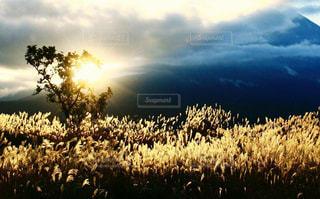 朝霧高原夜明け。の写真・画像素材[1461043]