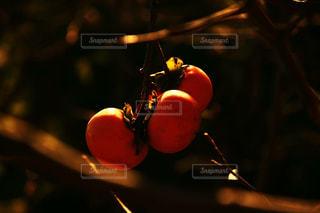 秋。の写真・画像素材[1461522]