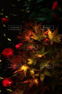 小さい秋の写真・画像素材[1469361]