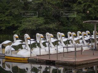 池に浮かぶスワンボートの写真・画像素材[1464150]
