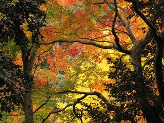 室生寺の鮮やかな美しい紅葉の写真・画像素材[1605404]