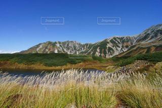 立山室堂平の紅葉とススキの写真・画像素材[1608913]
