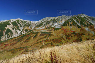 立山室堂平の紅葉とススキの写真・画像素材[1609316]