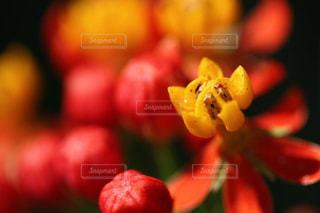 可愛い顔したお花の写真・画像素材[1708576]