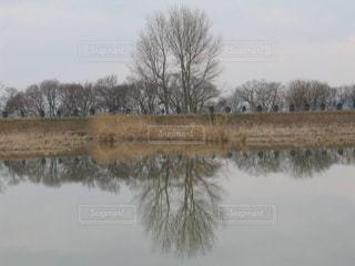 神秘的な早崎内湖の冬景色の写真・画像素材[1718629]