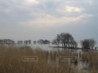 冬の琵琶湖と葦の風景の写真・画像素材[1718632]