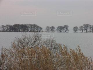 冬の琵琶湖と葦の風景の写真・画像素材[1718633]