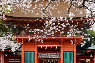 情緒あふれる富士本宮浅間大社の桜風景の写真・画像素材[1836689]