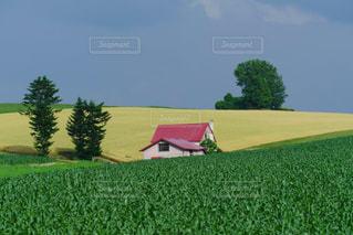 北海道美瑛の丘の赤い家の風景の写真・画像素材[1867163]