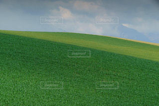 緑が美しい広大な美瑛の丘の写真・画像素材[1872605]