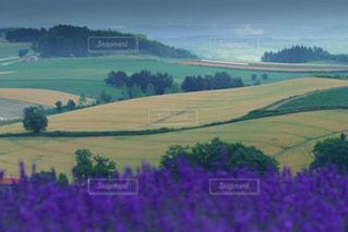 ラベンダーと美しい美瑛の丘風景の写真・画像素材[1872609]