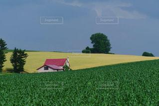 美瑛の丘の赤い家のある美しい風景の写真・画像素材[1954085]