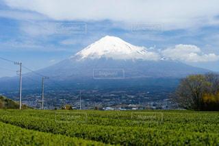 お茶畑と富士山の美しい風景の写真・画像素材[1955827]