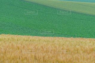 美しい美瑛の丘の田園風景の写真・画像素材[2072666]