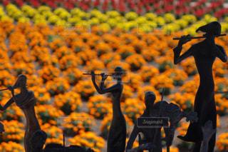 お花畑でフルートを奏でる女性の写真・画像素材[2283851]