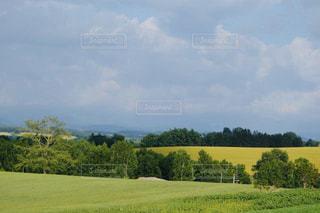 大自然の美しい美瑛の丘の夏の風景の写真・画像素材[2297948]