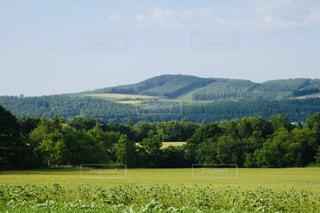 緑の美しい広大な美瑛の丘の風景の写真・画像素材[2299077]