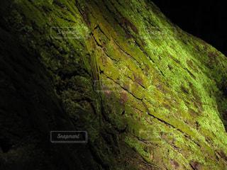 光を浴びた大木の美しい苔の写真・画像素材[2365775]