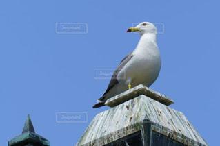 青空と小樽運河のカモメの写真・画像素材[2389912]