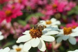 秋の花の香りを感じての写真・画像素材[2551555]