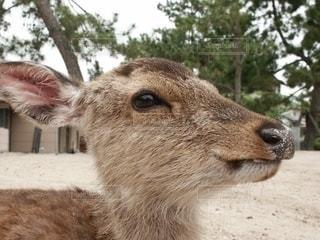 鹿の眼差しから元気をもらった瞬間の写真・画像素材[2609898]