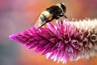 秋を生きてる感じのハチの写真・画像素材[2713289]