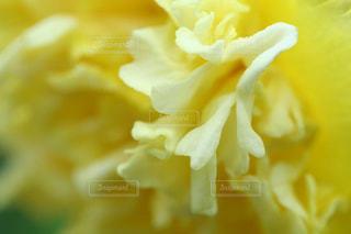優しいクリーム色の写真・画像素材[2880268]