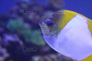 心癒される熱帯魚の写真・画像素材[2880310]