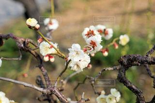 春の訪れの写真・画像素材[2929730]