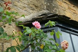 風情あるレンガ造りとバラの写真・画像素材[3033345]