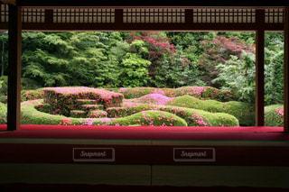 風情あるツツジの庭園の写真・画像素材[3251467]