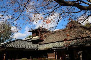 藁葺き屋根と紅葉風景の写真・画像素材[3839026]