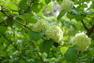新緑の美しい季節の写真・画像素材[4364606]