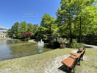 新緑が美しい公園の写真・画像素材[4394181]