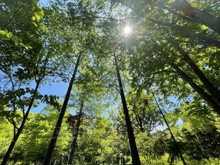 癒しの新緑の写真・画像素材[4394182]