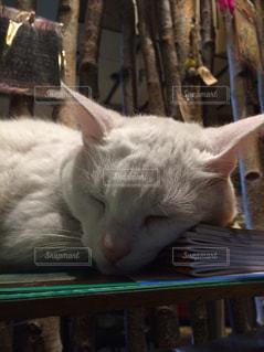 本をまくらにおやすみ猫ちゃんの写真・画像素材[1465915]