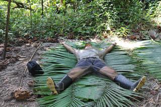 アマゾン奥地で天然マットレスでキャンプの写真・画像素材[1457715]