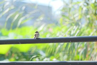 ウィンドウの上に座っている鳥の写真・画像素材[1458538]