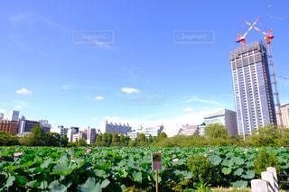 庭の背の高い建物の都市の景色の写真・画像素材[1458539]