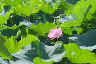 近くの花のアップの写真・画像素材[1458666]