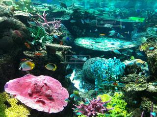 サンゴの水中ビューの写真・画像素材[1458984]