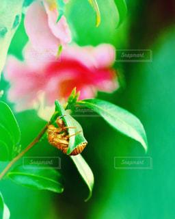 夏の残り香の写真・画像素材[1458953]