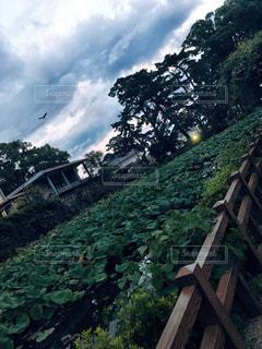 小田原城のお堀の写真・画像素材[1463247]