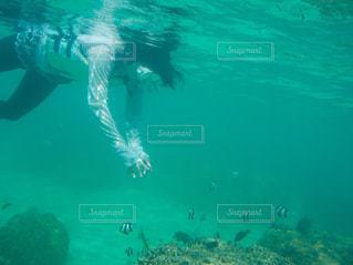 海中シュノーケリングの写真・画像素材[1464059]