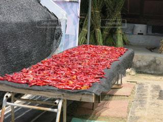 赤とうがらしを干す季節の写真・画像素材[1461146]