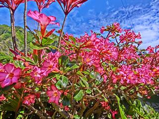 植物にピンクの花の写真・画像素材[1461948]