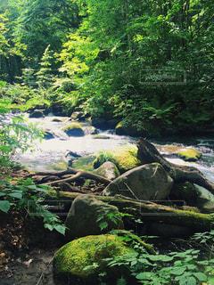 新緑の渓流の写真・画像素材[1463729]