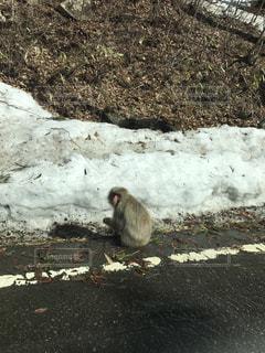 道端の猿の写真・画像素材[1461757]